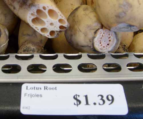 lotus-root