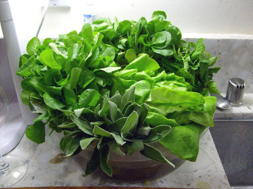 cress-butter-lettuce-and-mint