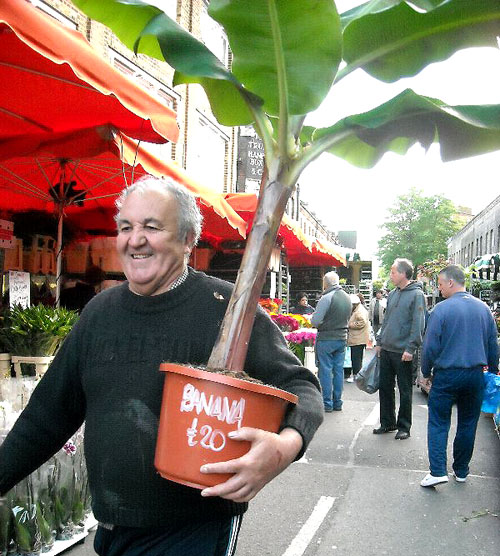 dude-with-the-awesome-banana-tree