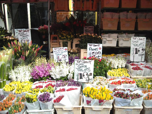 dutch-tulips-at-the-market