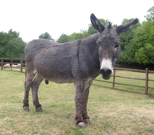 larry the boy donkey