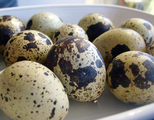 quail eggs to be broken over asparagus and hollandaise